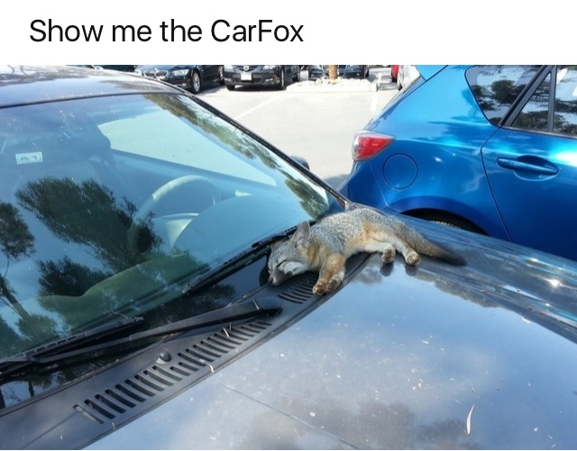 Carfax Meme By Cod Rocks Memedroid