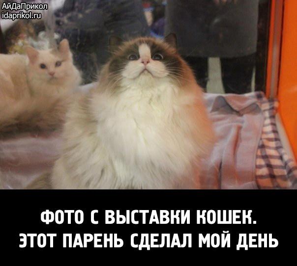 Cat Nakyrat