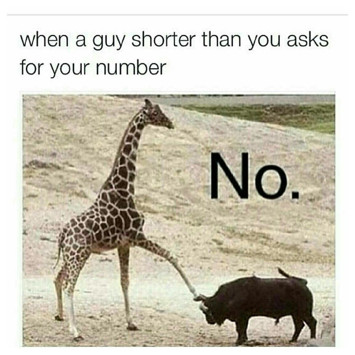No no nooooo