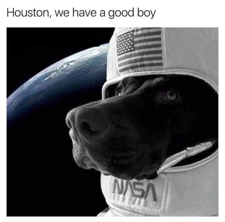 Who's a good boy