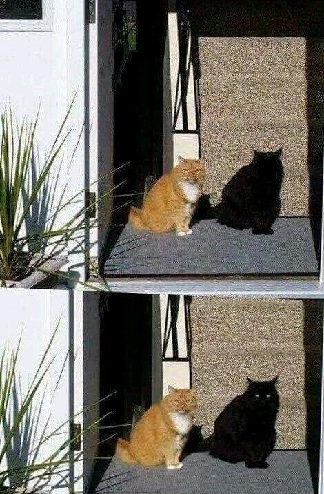 Chat ninja