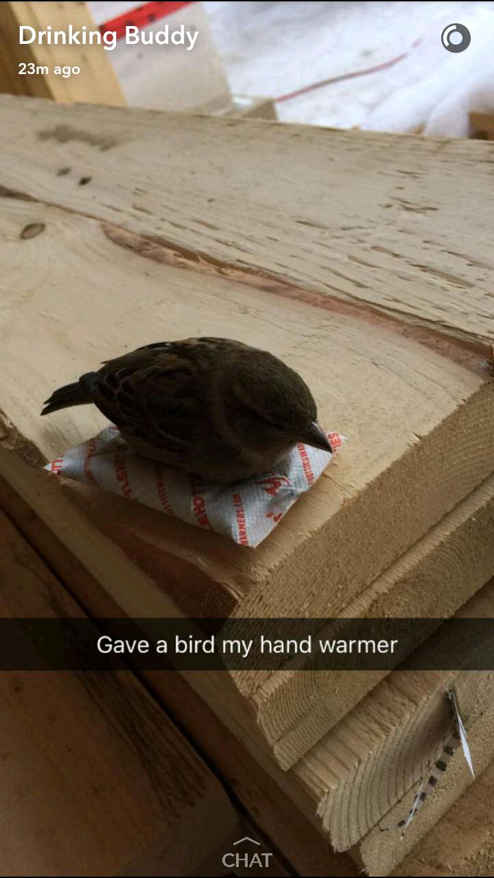 New Nest Lil Buddy Meme By Maxlwerth Memedroid