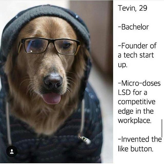 This dog sly af