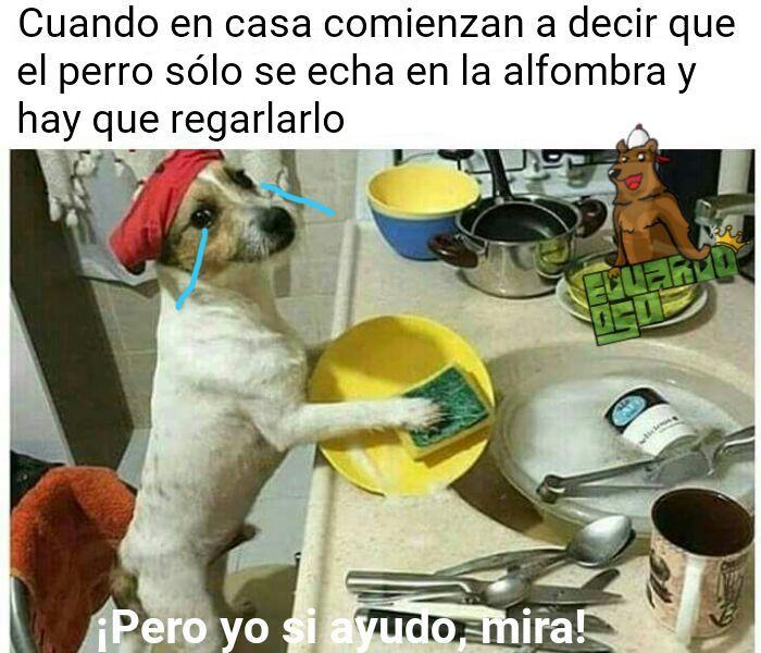 Firulais Te Amo Original Acepten Meme By Eduardooso Memedroid