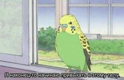 Если у меня будет попугай, то я научу его этой фразе