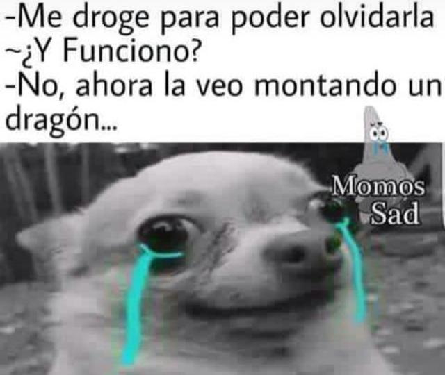 Aqui Dejo Nueva Pinshi Plantilla Meme By Elpato6415 Memedroid