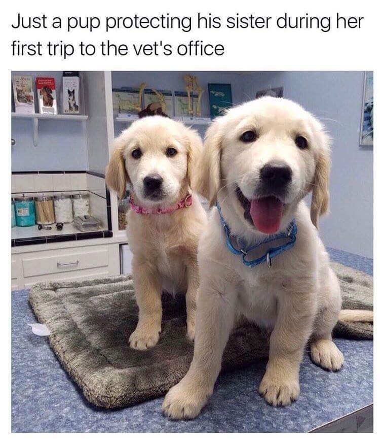 I want both puppers