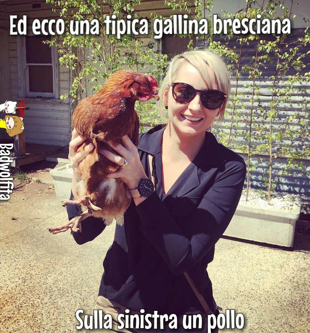 Le galline bresciane sono le migliori