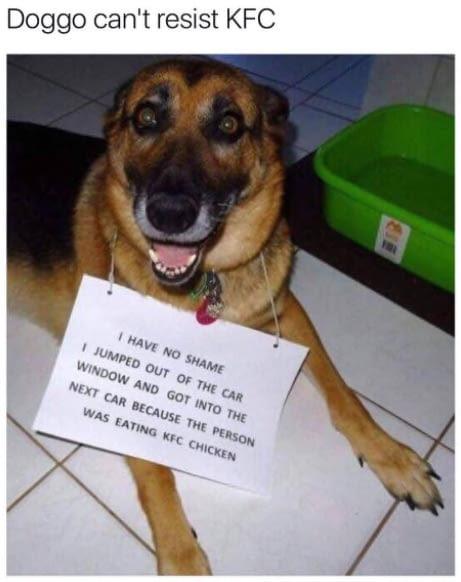Dog can't resist KFC - meme