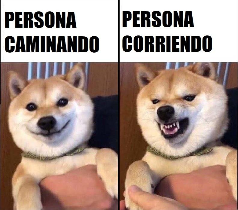 porque los perros son así? - meme