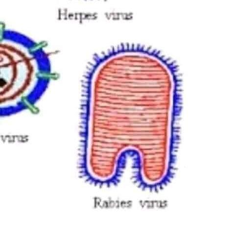 lso minios son el virus de la rabia-ahhh con razon- - meme