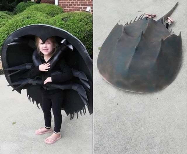 Horseshow crab costume - meme