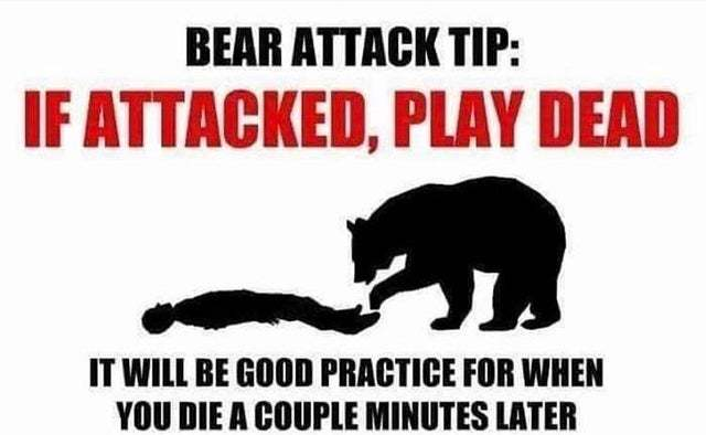 Bear attack - meme