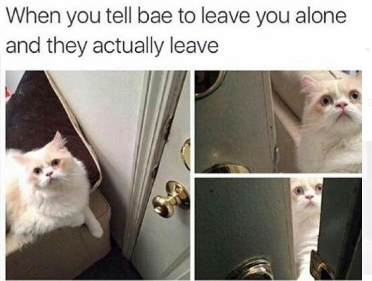 Cats are sweethearts :3 - meme