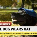 Nice hat doggo