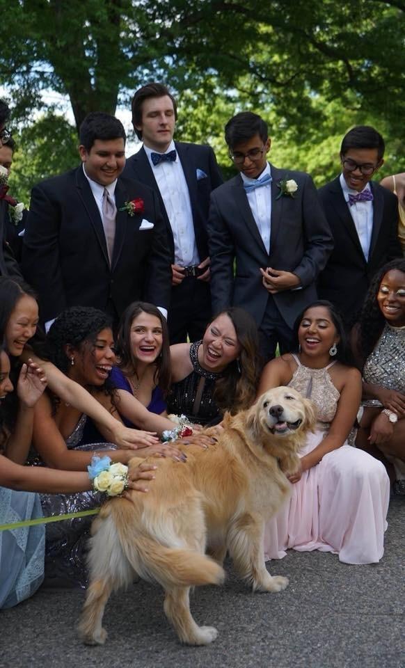 Smiling dog at prom - meme