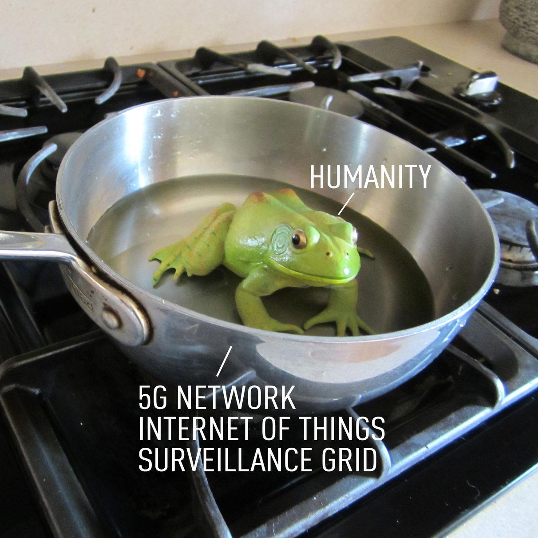 Frog in a Pot - meme