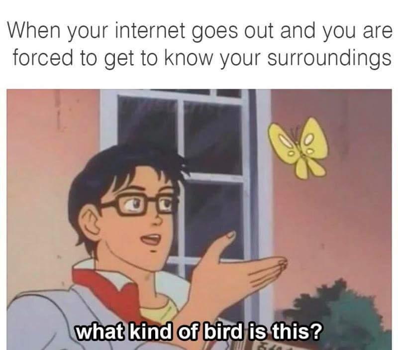 IRL - meme