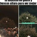 Alv subire al árbol