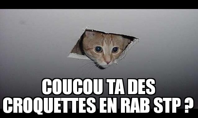 Lé chat - meme
