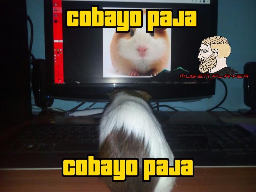 Cobayo paja - meme