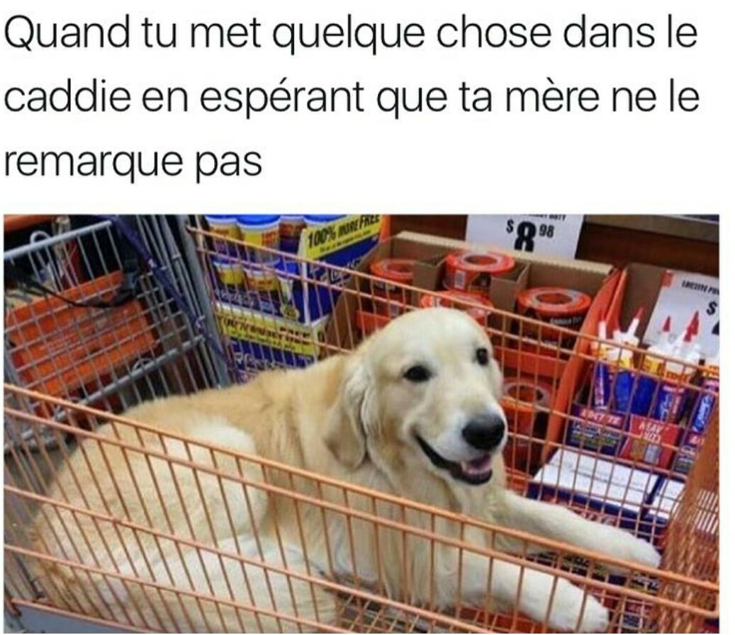 Mdr c'est un chien dans le caddie - meme