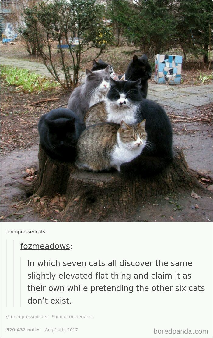 Cats on log - meme