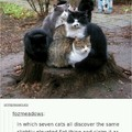 Cats on log