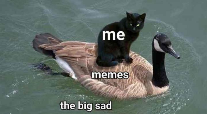 The big sadness comes for us all eventually - meme
