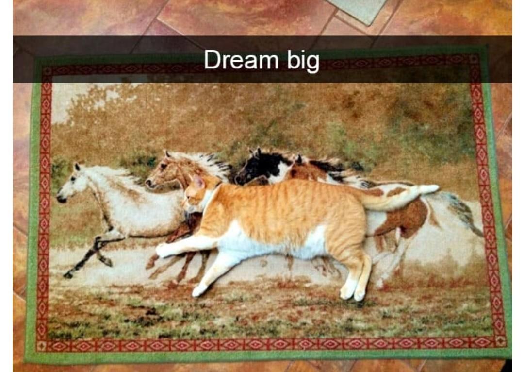 What cat? That's a horse - meme