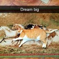 What cat? That's a horse