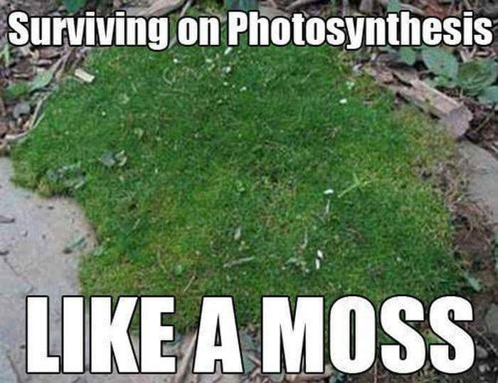 Image result for photosynthesis meme