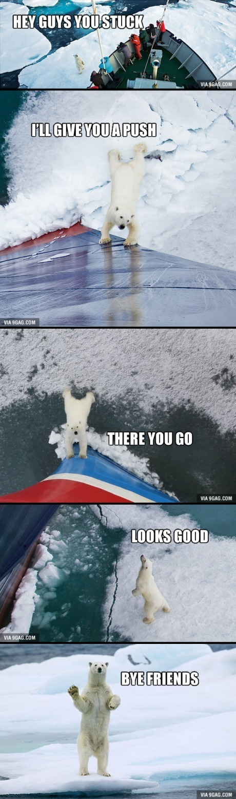 Look at the Polar Bear's 6-Pack. Betting that a lot of you guys are really jealous... - meme