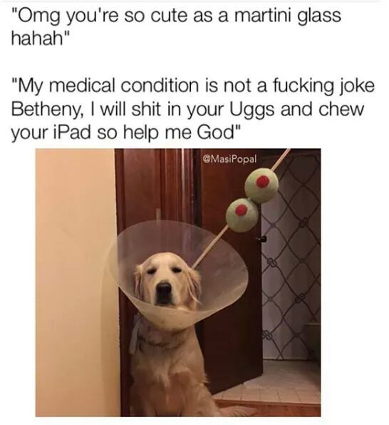 Martinidog - meme