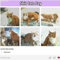 a bitch is a female dog, not s ducking cat, tumblr.