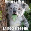 Australia VS Brasil