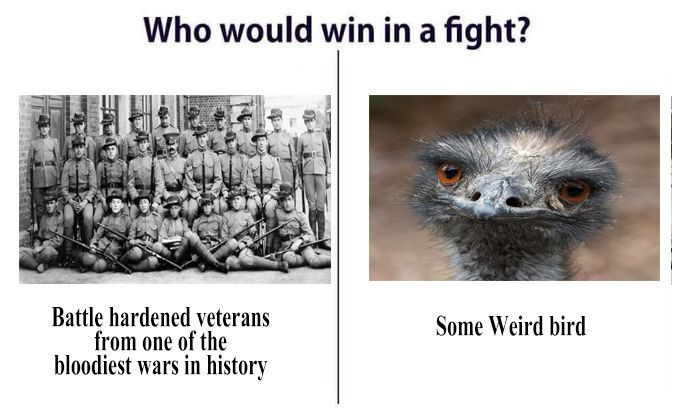 Emu War - meme