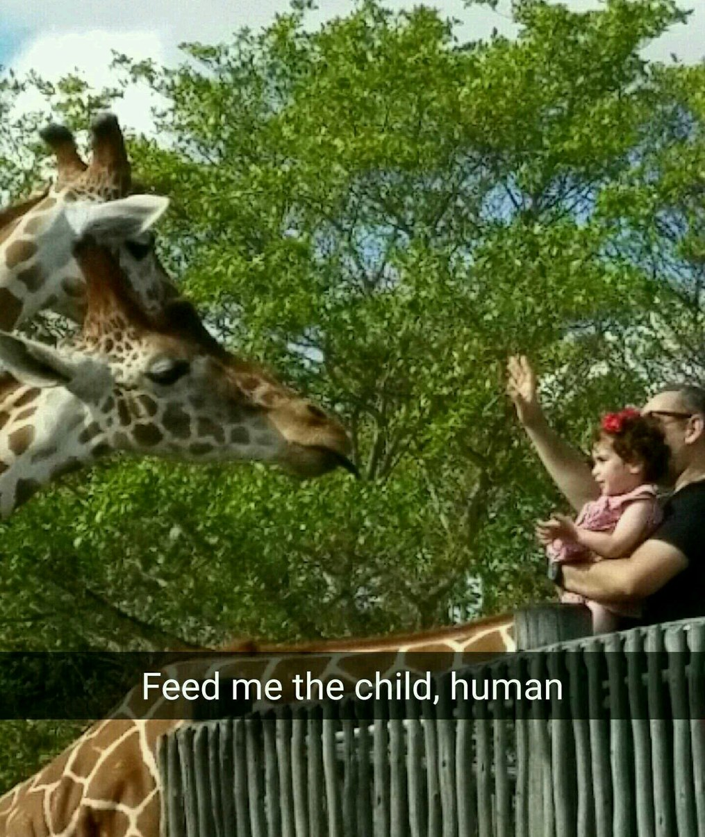 Everytime I go to the zoo - meme