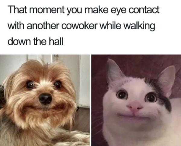 We all do it - meme
