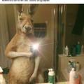 La invasión de canguros ajaj