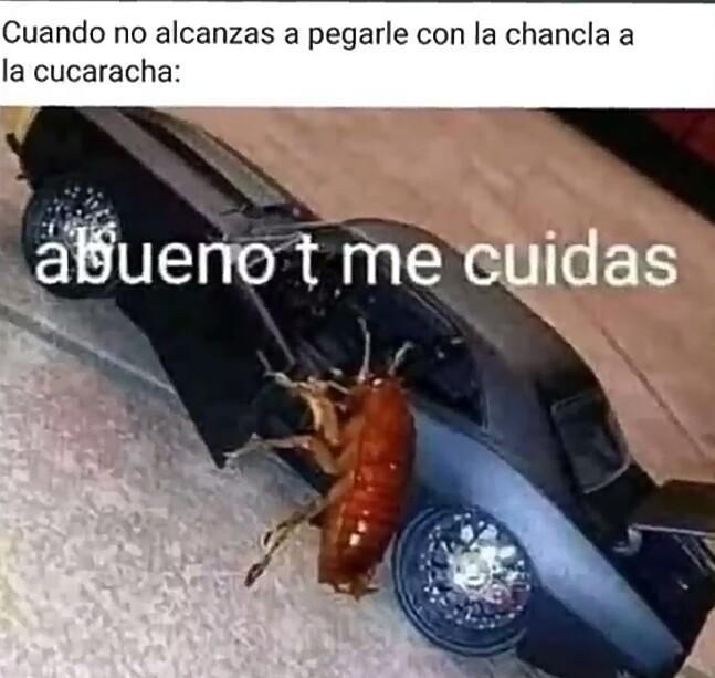 Y volo - meme