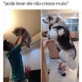 Alguém sabe que cachorro é esse?