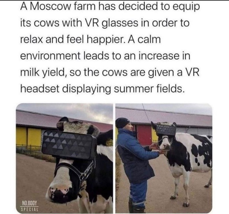 the cow matrix - meme