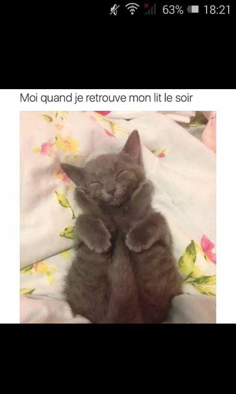 Le lit c'est la vie - meme