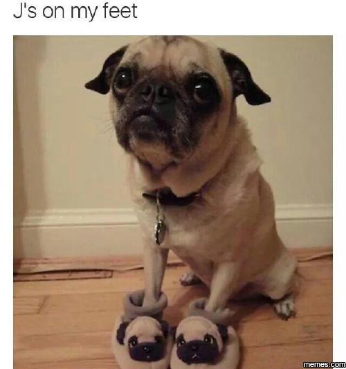Pugsy - meme