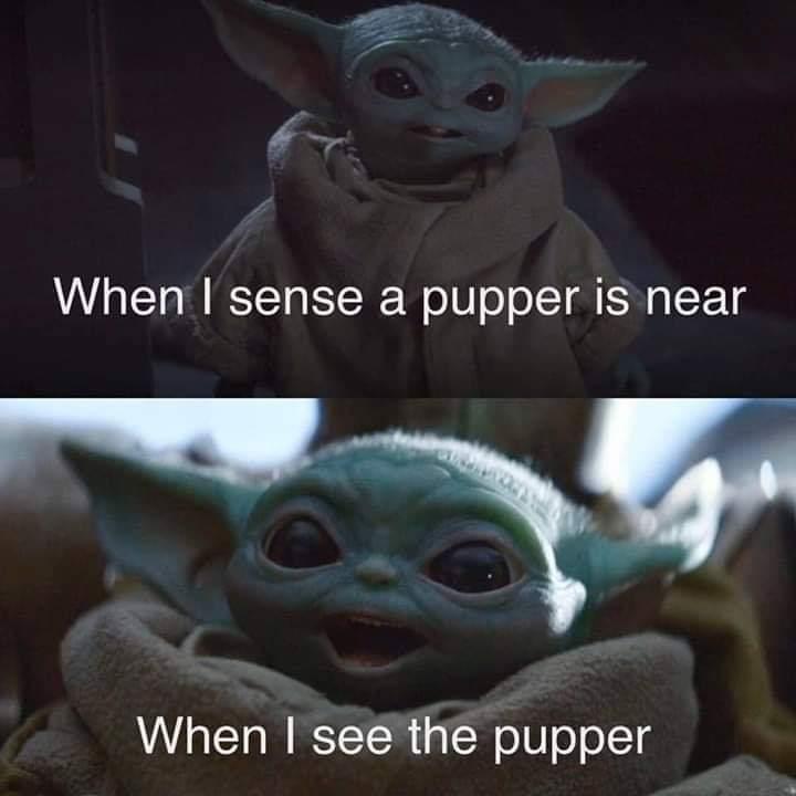 Doggo I am - meme