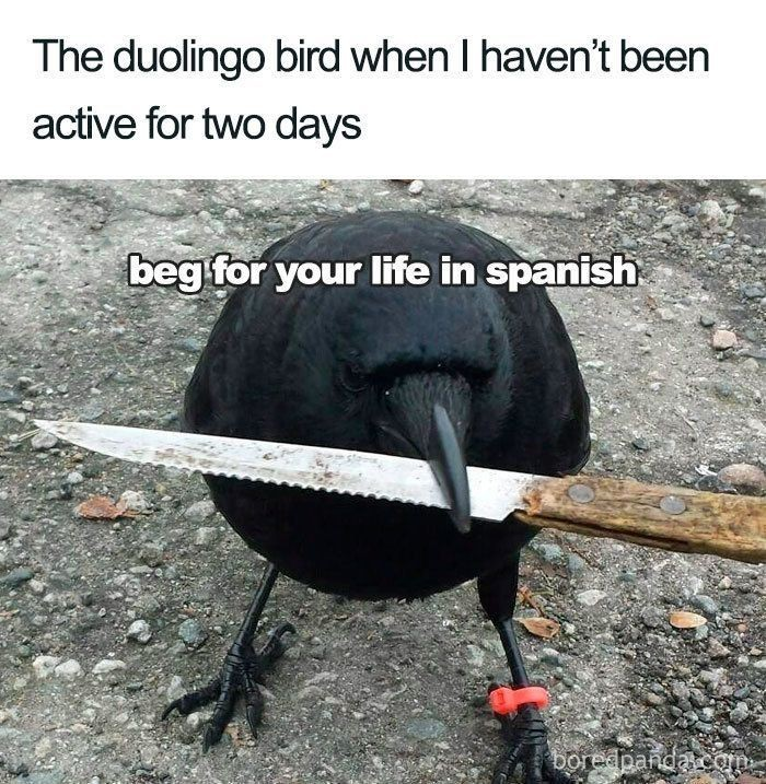 Passaros - meme