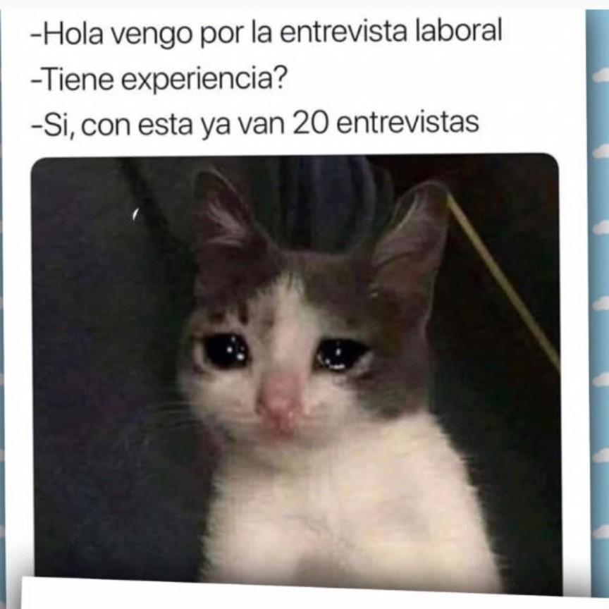 El gato entrevistado - meme