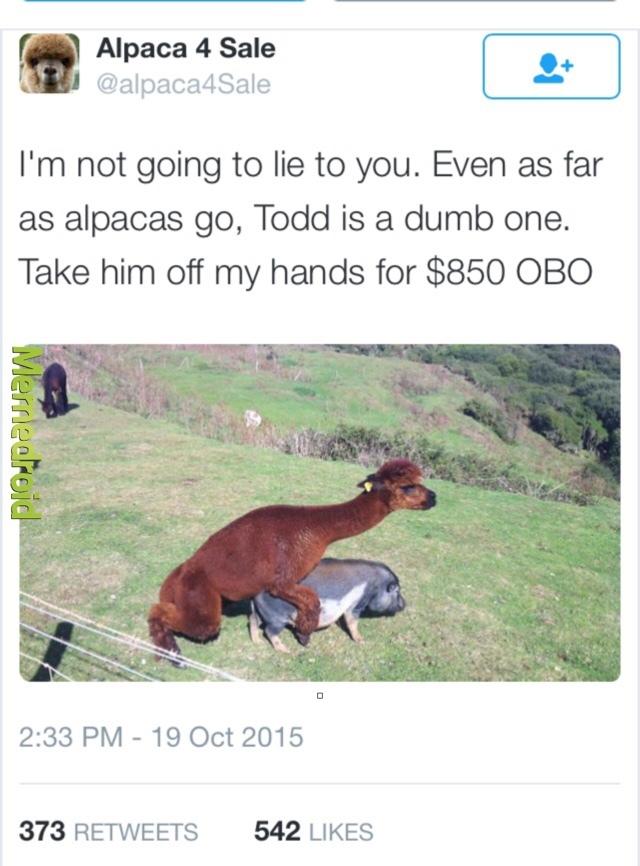 Alpaca 4 sale - meme
