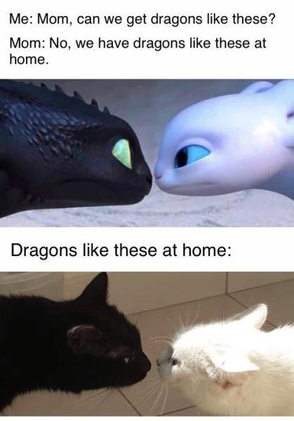 What does the dragon say? (Meow) - meme